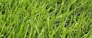 Suffolk Virginia Grass